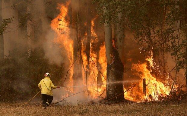 Пожежа в Австралії, фото ZIK