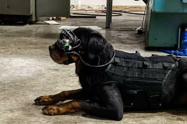 Розумні окуляри для собак, The Verge