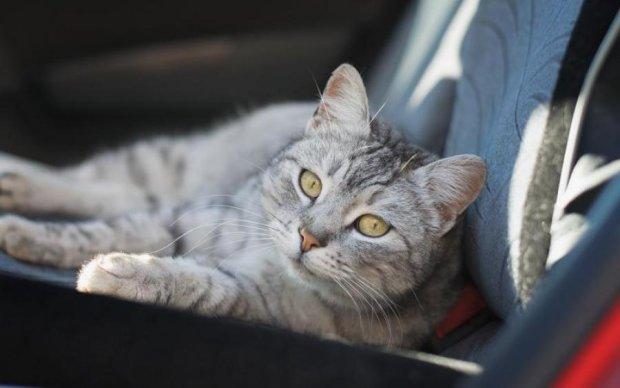 Котик-путешественник после езды на подвеске колеса остался невредим: видео