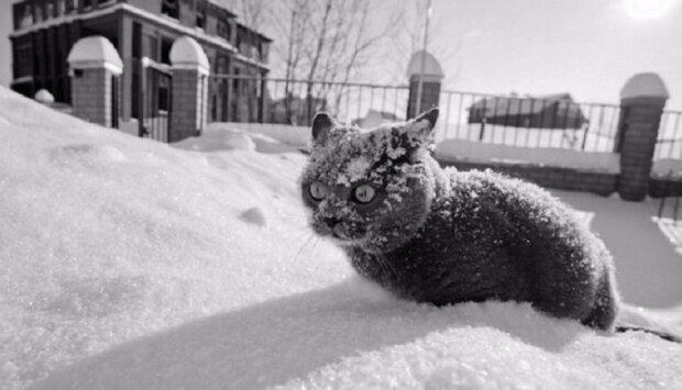 На українців очікує нещадна зима, такого не було протягом 30 років: синоптики попередили про невідворотне