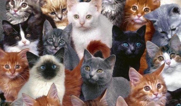 Американка залишила свій будинок через любов до кішок