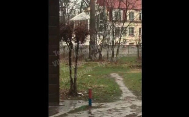 Киевлянин отлупил дерево из-за закрытых площадок: вот она, красная зона