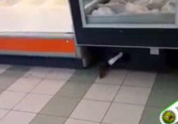 """В популярном супермаркете """"Рататуй"""" напугал покупателей: убежал под прилавок"""
