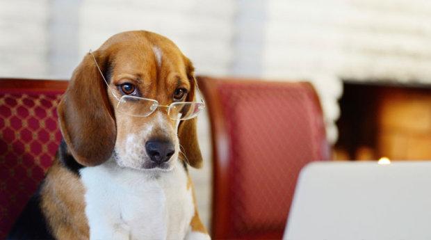 Не такі вже й розумні: вчені розповіли нову правду про собак