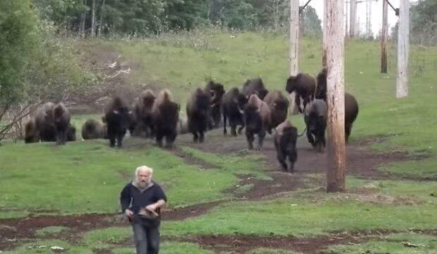 Фермер Тарас Казна выращивает бизонов, скриншот с видео