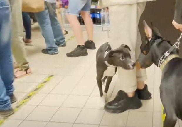 Собаки в магазинах, скриншот: YouTube
