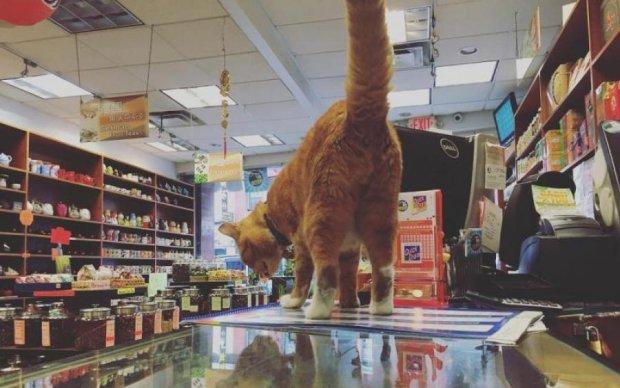 """Киянам продають цукор з """"котячою добавкою"""": відео"""