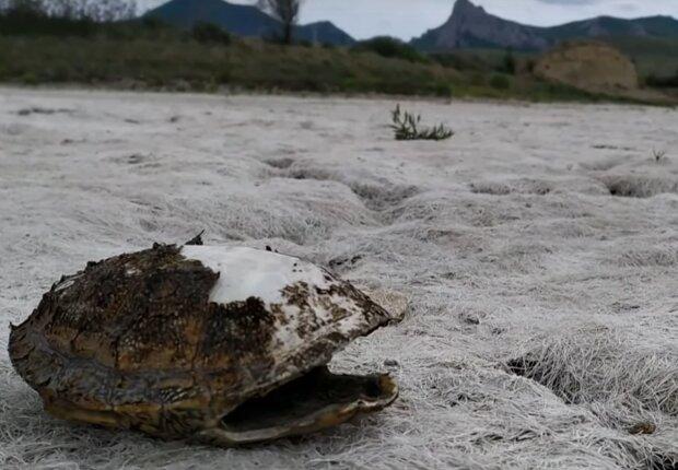 В Крыму пересыхают озера, скрин с видео