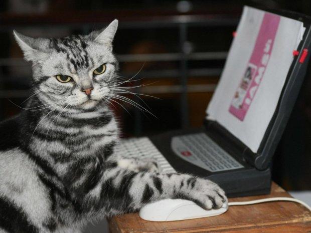 В Днепре кот Семен устроился на работу, и это не шутка: дармового Whiskas больше не будет