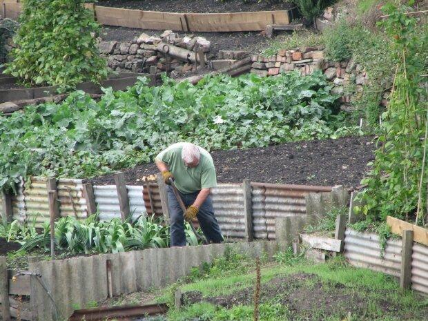 Мужчина в саду, фото pxhere