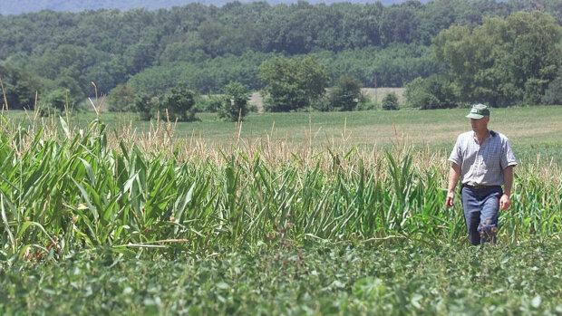 Власти объяснили, как закон о рынке земли поможет простым фермерам: получат помощь