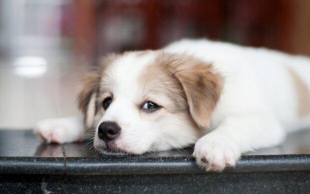 Живодерка записала на видео пытки невинного щенка: тушила сигареты об глаза
