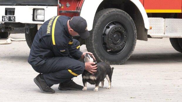 У Франківську рятувальники прихистили безпритульного собаку, фото: Суспільне