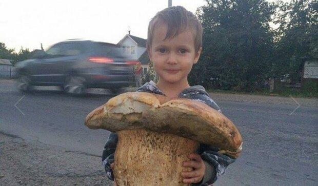 В Карпатах знайшли гриб розміром з дитину (фото)