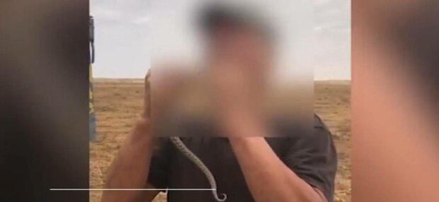 Скончался от укуса, фото: скриншот из видео