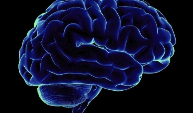 Чем меньше мозг, тем сильнее иммунитет