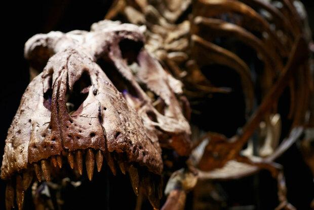 скелет динозавра, фото GettyImages