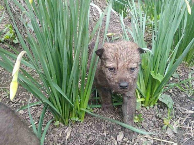 В Одеському зоопарку вовчиця дала потомство, фото: Думська