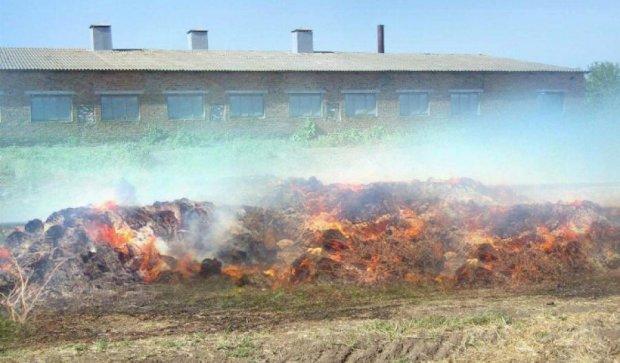Більше 100 свиней згоріли на Кіровоградщині