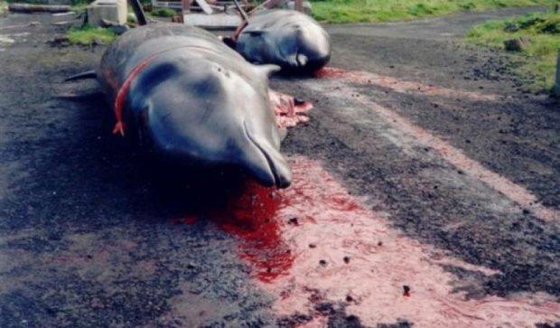В Японии началась ежегодная охота на дельфинов