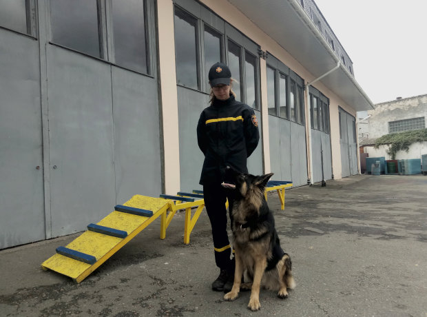 Рятують там, де не під силу людям: українські собаки-герої вразили світ мужністю, погляньте на цих пухнастих красенів