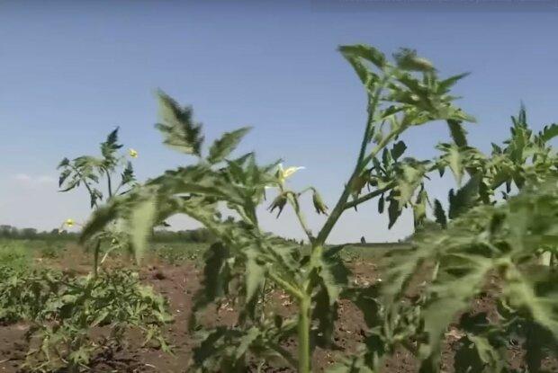 Засуха, скриншот: YouTube