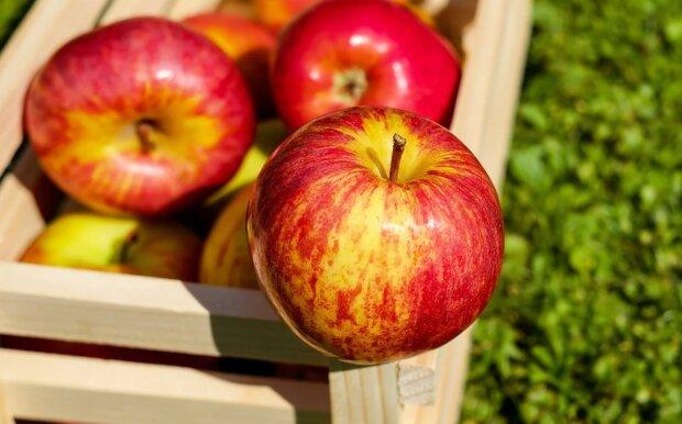 Яблоки, фото: pixabay.com