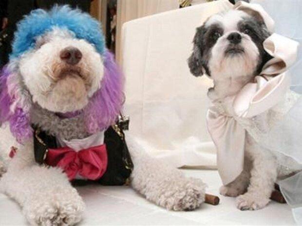 Свадьба собак: peoples.ru