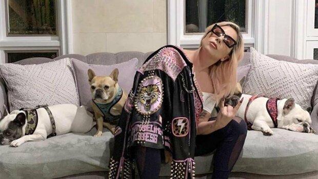 Леді Гага з собачками, фото: Instagram