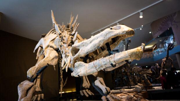 останки динозавра, фото Pxhere