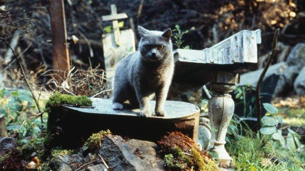 """""""Кладовище домашніх тварин"""" Кінга: трейлер фільму злили у мережу"""