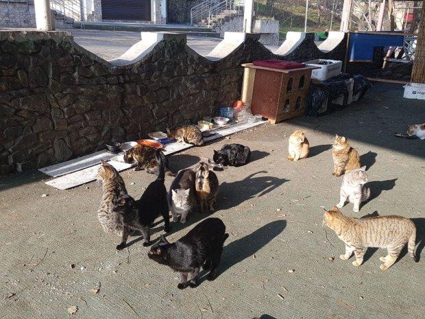 У Львовi взялися за вуличних котiв: що зроблять з чотирилапими