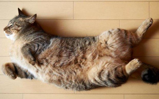 Роздратування або лікування: звідки береться дивовижне котяче муркотіння