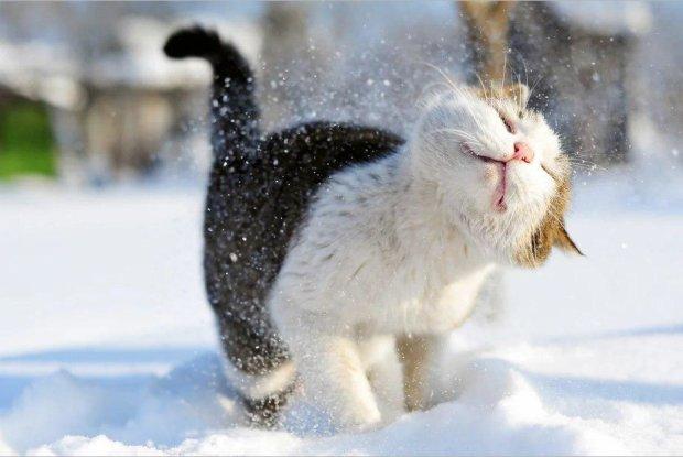 Погода в ближайшее время устроит сумасшедшие качели: таких сильных морозов Украина давно не видела