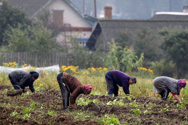 Хто зможе купувати землю в Україні: у Зеленського розвіяли головні міфи, відео
