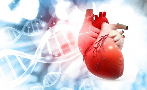 DWORF: знайдено молекулу, яка покращує роботу серця
