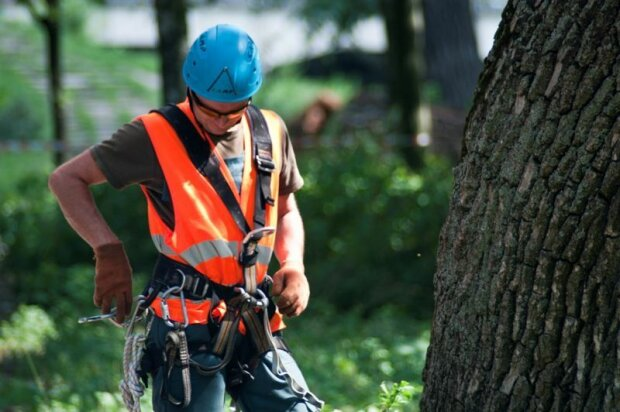 Пожежники не допомогли, врятував альпініст: у Харкові малюк чотири дні просидів на дереві
