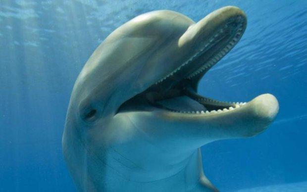 Вчені зізнались, з якою метою напихали дельфінів ЛСД