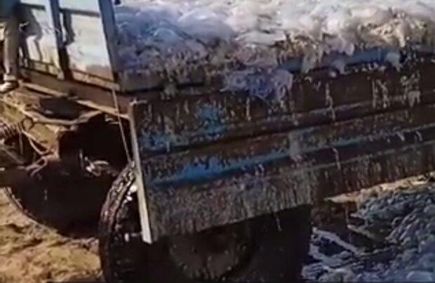 У Кирилівці медуз почали вивозити вантажівками: їх більше, ніж туристів