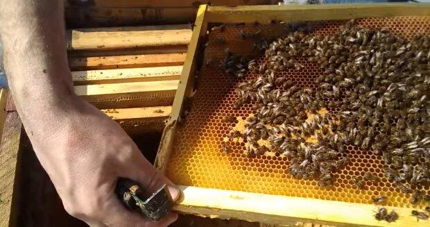 Бджоли, скріншот з відео