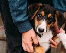 Собака, Ілюстративне фото