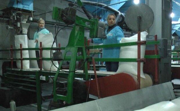 Виробництво цукру, фото suspilne