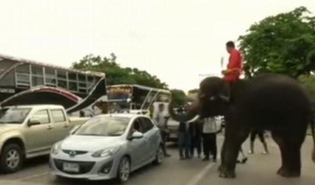 Слони агітують таїландців за конституцію (ВІДЕО)