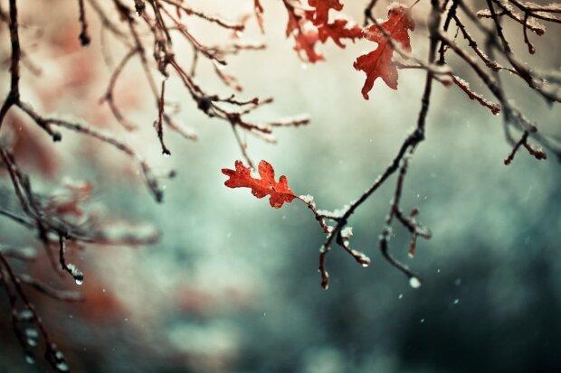 Шапки - геть, до Івано-Франківська йде потепління: чим потішили синоптики 8 грудня