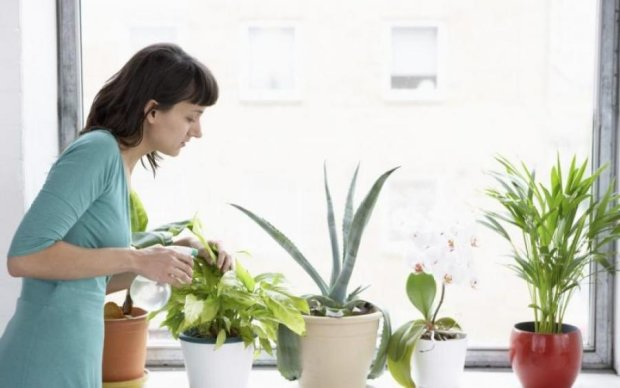 Если мечтаете выйти замуж, выкиньте из дома эти растения