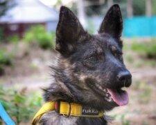отважный пес Джесси защищал украинских моряков