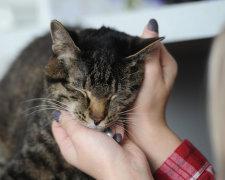 Кішки здатні допомагати хворим