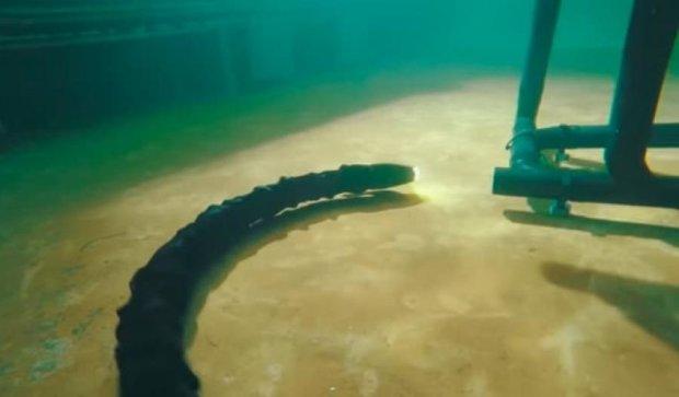 Норвежские ученые создали змею-робота (фото, видео)