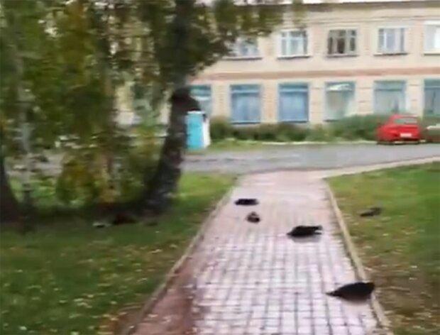 Гинуть ворони, скріншот з відео