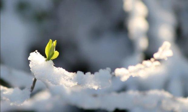 Погода на 13 березня: тепло повернеться, але ненадовго